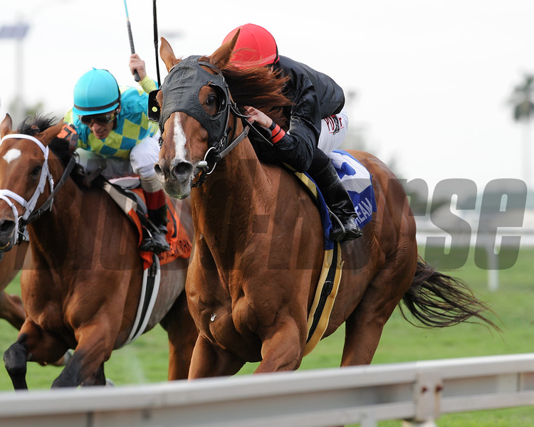 Imagining wins the 2015 Pan American Stakes.<br /> Coglianese Photos/Kenny Martin