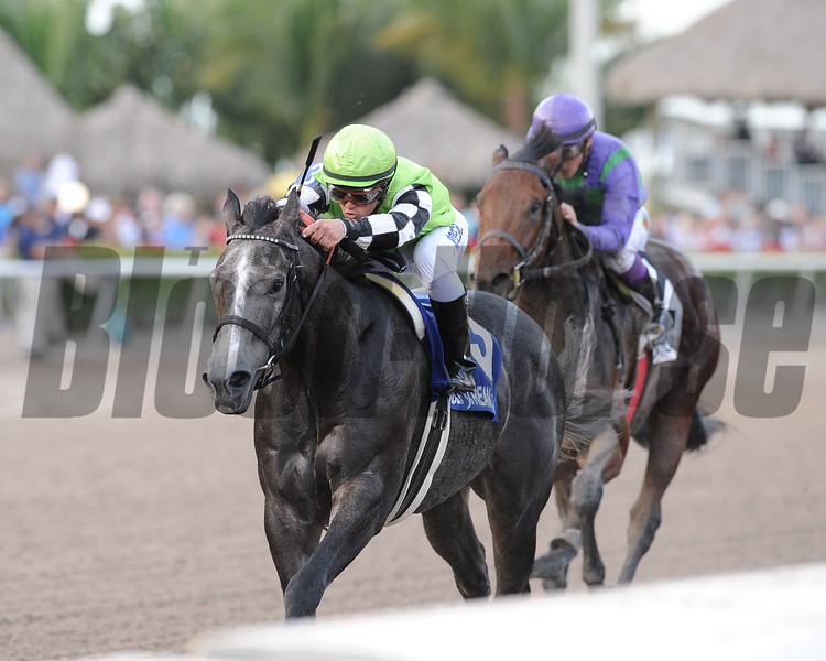 Bluegrass Singer wins the 2015 Mucho Man Stakes at Gulfstream Park.<br /> Coglianese Photos/Kenny Martin
