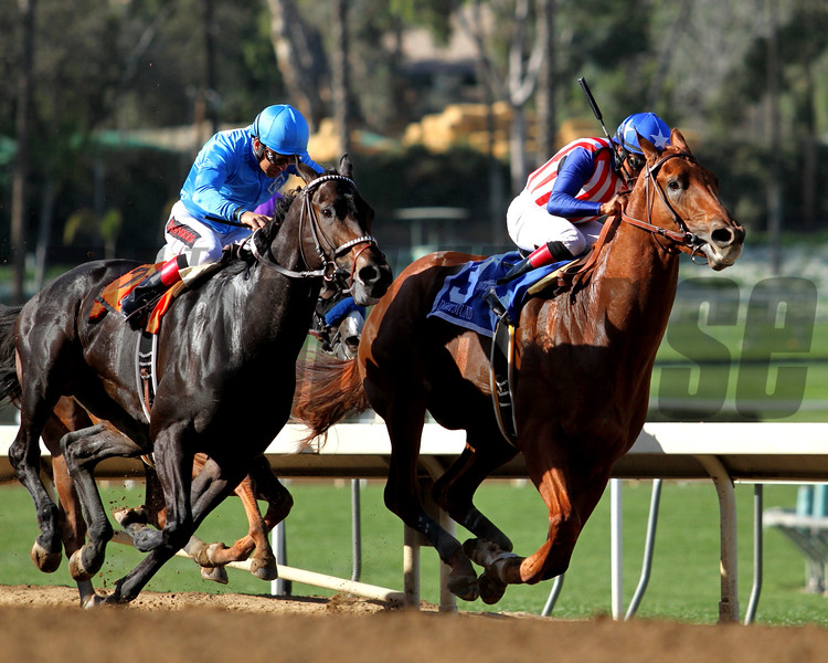 DORTMUND (winner) and BOLO in the G2 San Felipe Stakes at Santa Anita on 03.07.15. Photo by: Helen Solomon