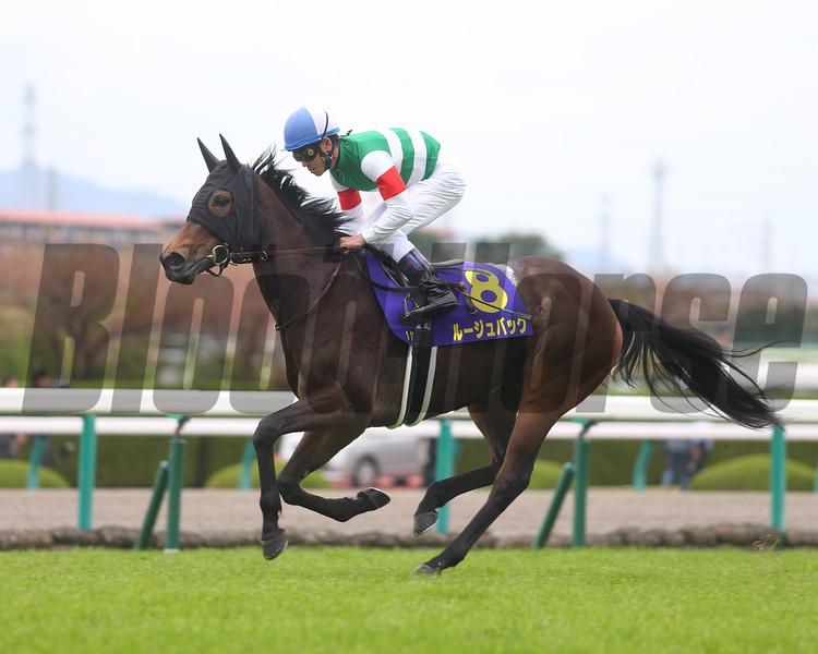 Rouge Buck in the 2015 Oka Sho (Japanese Two Thousand Guineas) won by Let's Go Donki.<br /> Masakazu Takahashi