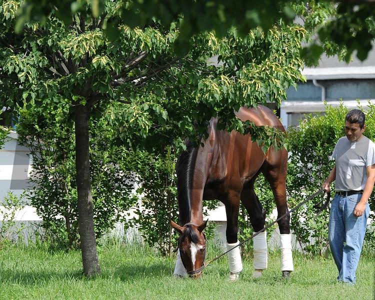 Tonalist May 24, 2015 at Belmont Park.<br /> Coglianese Photos/Susie Raisher