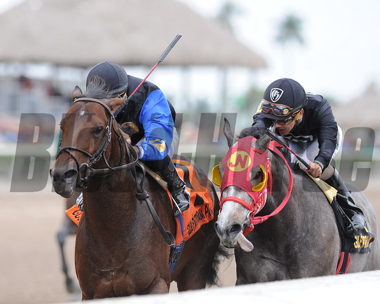 Barbados wins the 2015 Hutcheson Stakes at Gulfstream Park.<br /> Coglianese Photos/Kenny Martin