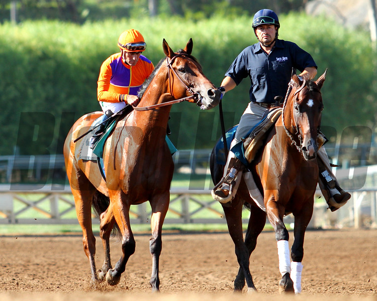 BEHOLDER goes to post, with her jockey Gary Stevens, as the overwhelming favorite in the G1 Zenyatta Stakes at Santa Anita 09.26.15. Photo: Helen Solomon
