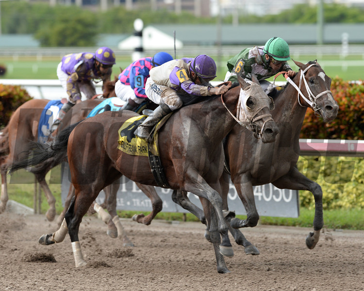 Yourdreamsormine battles down the stretch to win the Florida Sire Unbridled Stakes at Gulfstream Park. <br /> Coglianese Photo