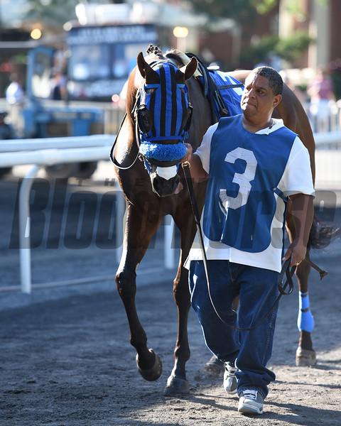 Private Zone wins the 2015 Belmont Sprint Championship Stakes.<br /> Coglianese Photos/Nicole Digiovanni