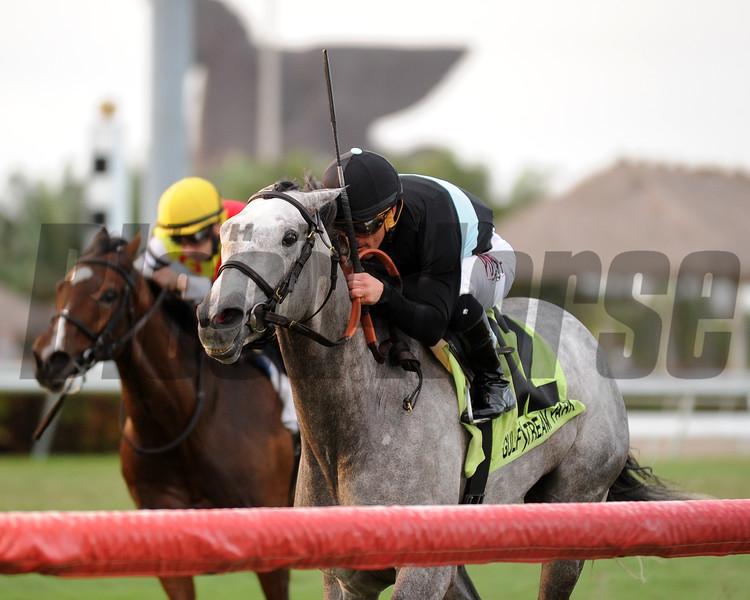 Goldy Espony (FR) wins the La Prevoyante Stakes Dec. 26, 2015.<br /> Coglianese Photos/Kenny Martin