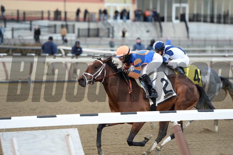 Overprepared wins the 2015 Busanda Stakes at Aqueduct. <br /> Coglianese Photos