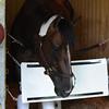 Carpe Diem at Belmont Park May 17.<br /> Coglianes Photos/Susie Raisher