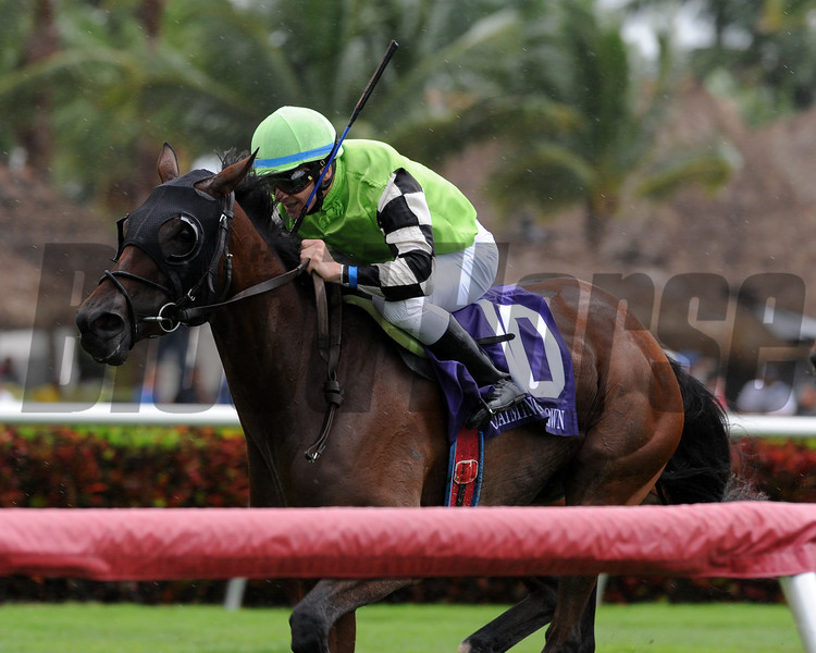 Quiet Kitten claws her way to the finish in the Starter Stakes at Gulfstream Park. <br /> Coglianese Photo