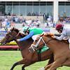 Lady Lara wins the 2015 Honey Fox Stakes.<br /> Coglianese Photos/Lauren King