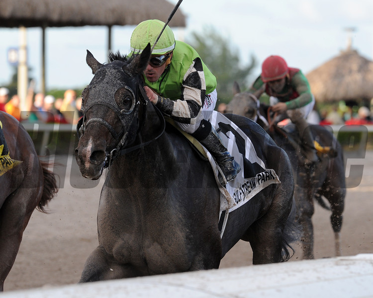 Valid wins the 2015 Harlan's Holiday.<br /> Coglianese Photos/Kenny Martin