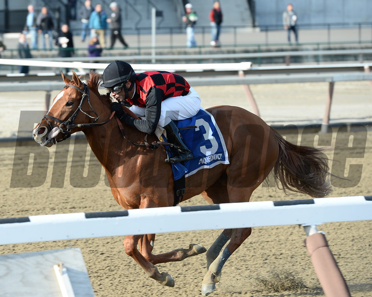 "Majestic Affair wins the 2015 Fred ""Cappy"" Capossela Stakes at Aqueduct.<br /> Coglianese Photos/Joe Labozzetta"