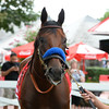 American Pharoah - Saratoga, August 27, 2015.<br /> Coglianese Photos/Joe Labozzetta