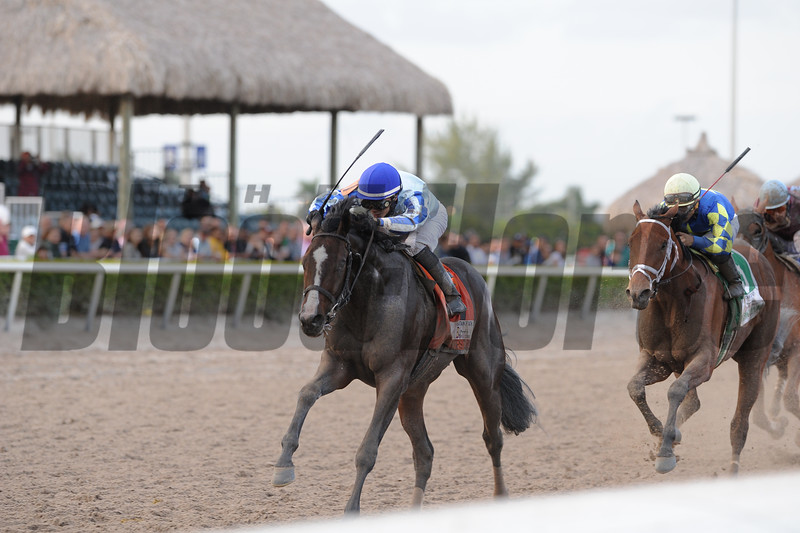 Itsaknockout (right) wins the 2015 Fountain of Youth via DQ.<br /> <br /> Credit: Coglianese Photos/Kenny Martin
