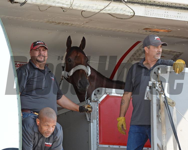 American Pharoah - Saratoga, August 26, 2015.<br /> Coglianese Photos/Susie Raisher