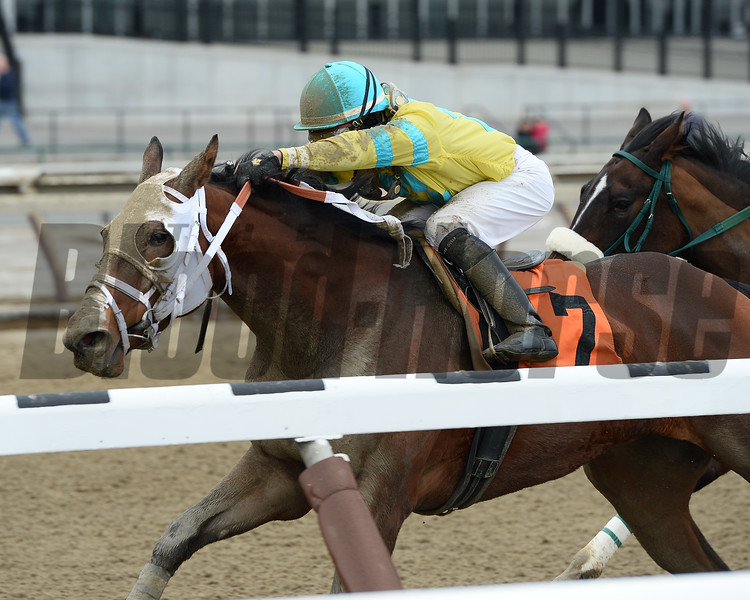 Pebble Beach Baby wins the 2015 Sis City Stakes.<br /> Coglianese Photos/Joe Labozzetta