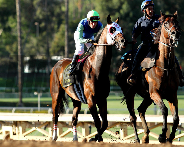 IMPERATIVE goes to post, with Corey Nakatani, in the G1 Awesome Again Stakes at Santa Anita 09.26.15. Photo: Helen Solomon