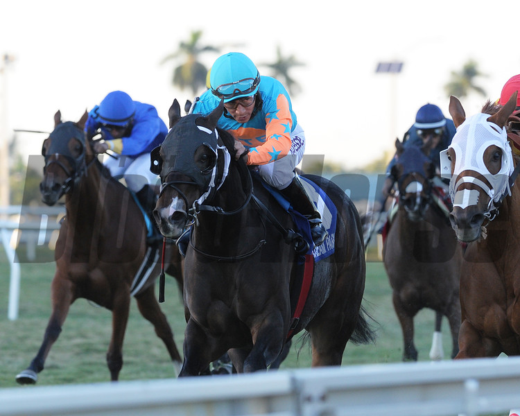 I'm Already Sexy wins the 2015 Cooper City Handicap at Gulfstream Park.<br /> Coglianese Photos/Kenny Martin
