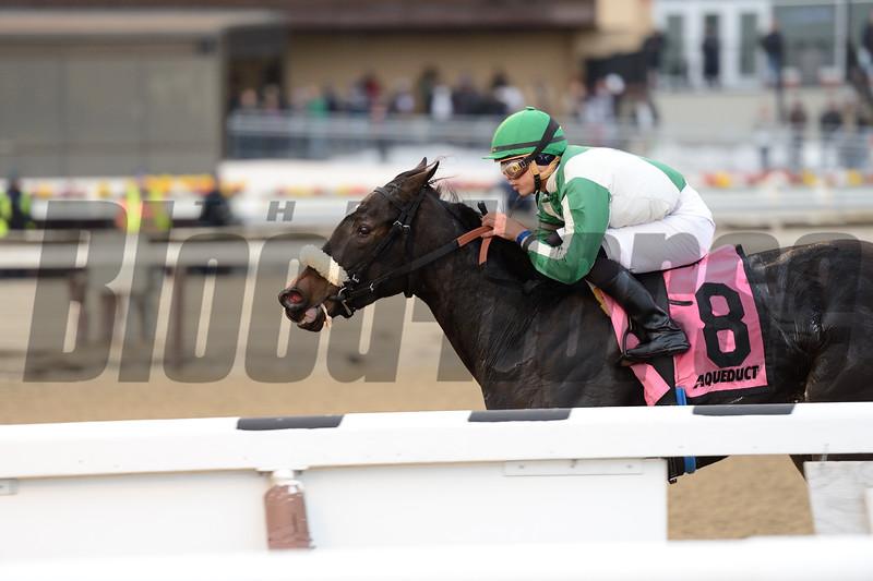 Hard to Stay Notgo wins the Franklin Square Stakes Feb. 1, 2015.<br /> Coglianese Photos/Joe Labozzetta