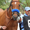 Bob Baffert trained HOPPERTUNITY for the G1 Gold Cup at Santa Anita 06.27.15. Photo by Helen Solomon