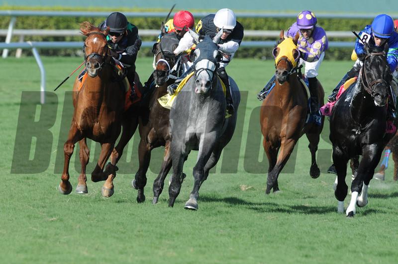Manchurian High wins the 2015 Florida Sunshine Millions Turf Stakes.<br /> Coglianese Photos