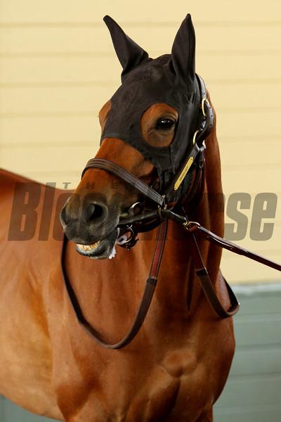 Spendthrift Farm's champion BEHOLDER prior to the Santa Lucia Stakes at Santa Anita 04.10.15. Photo by: Helen Solomon