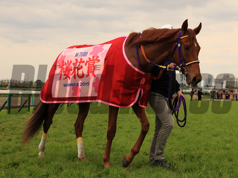 Let's Go Donki wins the 2015 Oka Sho (Jpn-I Japanese Two Thousand Guineas).<br /> Naoji Inada Photo