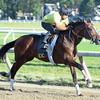 Tonalist - Saratoga, July 31, 2015.<br /> Coglianese Photos/Susie Raisher