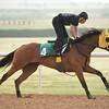 Harp Star at Meydan March 25 for the Dubai World Cup Carnival.<br /> Mathea Kelley/Dubai Racing Club, Meydan, Dubai UAE