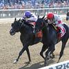 Stallwalkin' Dude wins the Diablo Stakes.<br /> Coglianese Photos/Chelsea Durand