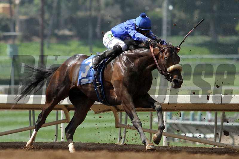 TRIED AND TRUE for Godolphin Racing, ridden by Martin Pedroza, and trained by E. Harty in an Allowance race for three-year-olds at Santa Anita 05.30.15. Photo by Helen Solomon