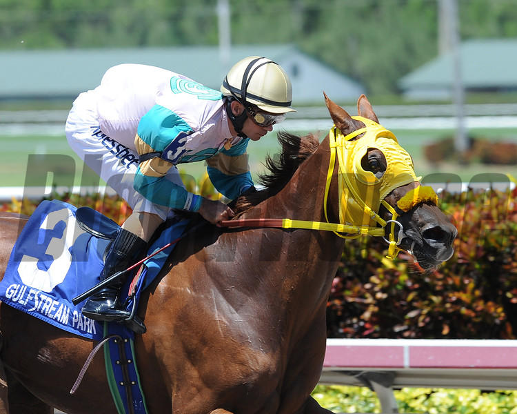 Flutterby sped gate to wire in a dazzling 9 1/4-length triumph in the $60,000 Sea Lily Handicap May 30, sending her 94-year-old breeder, owner, and trainer Jerry Bozzo to the Gulfstream Park winner's circle<br /> Photo by: Lauren King/Coglianese Photo