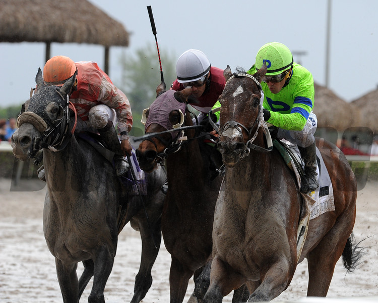 Runs With Bulls charges home to win the Starter Stakes at Gulfstream Park. <br /> Coglianese Photo