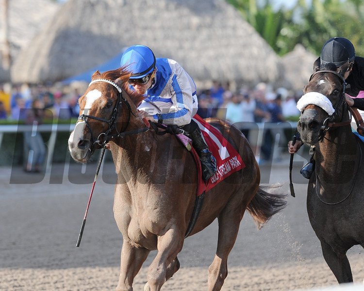 Lea wins the 2015 Hal's Hope at Gulfstream Park.<br /> Coglianese Photos/Kenny Martin