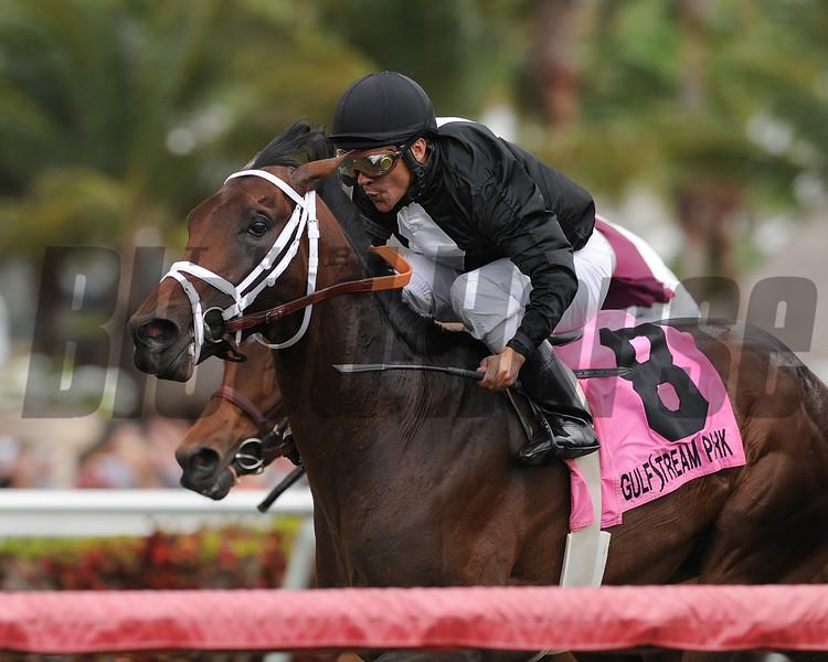 Eh Cumpari wins the 2015 Palm Beach Stakes.<br /> Coglianese Photos/Kenny Martin