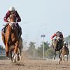 Sheer Drama wins the 2015 Royal Delta Stakes.<br /> Coglianese Photos/Leslie Martin