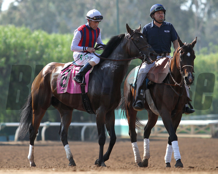 CATCH A FLIGHT (ARG) and Gary Stevens prior to winning the G2 Californian Stakes, a prep race for the G1 Gold Cup, at Santa Anita 05.30.15. Photo by Helen Solomon