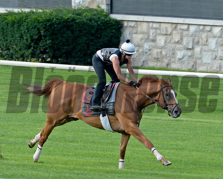 Wise Dan with Jenn Patterson breezes at Keeneland on July 17, 2015<br /> image 3650<br /> Anne M. Eberhardt photo
