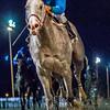 12/31/2015  -  Half Cajun with Richard Eramia aboard wins the Louisiana Futurity - Colt & Gelding Division at Fair Grounds.  Hodges Photography / Amanda Hodges Weir