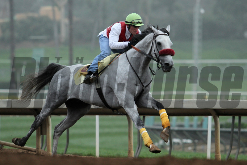 Beautiful worker in the fog at Santa Anita 05.30.15. Photo by Helen Solomon