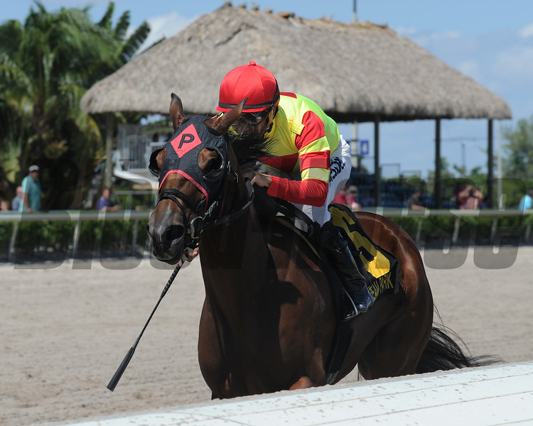 Moment of Delight feels just that at the finish of the Florida Sire Meadow Star Stakes at Gulfstream Park. <br /> Coglianese Photo