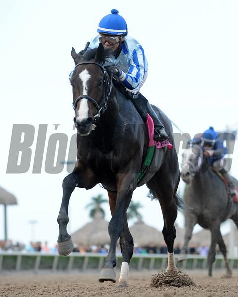 Upstart wins the 2015 Holy Bull.<br /> Coglianese Photos