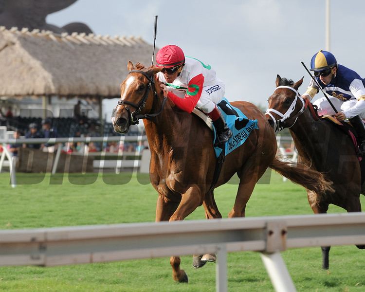 Night Prowler wins the 2015 Dania Beach Stakes at Gulfstream Park.<br /> Coglianese Photos/Kenny Martin