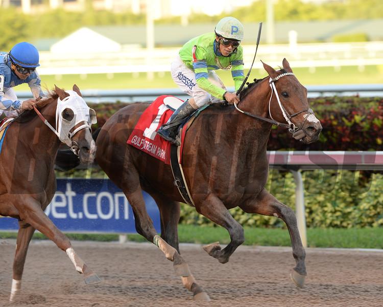 Sr. Quisqueyano wins the 2015 Florida Sunshine Millions Classic Stakes.<br /> Coglianese Photos