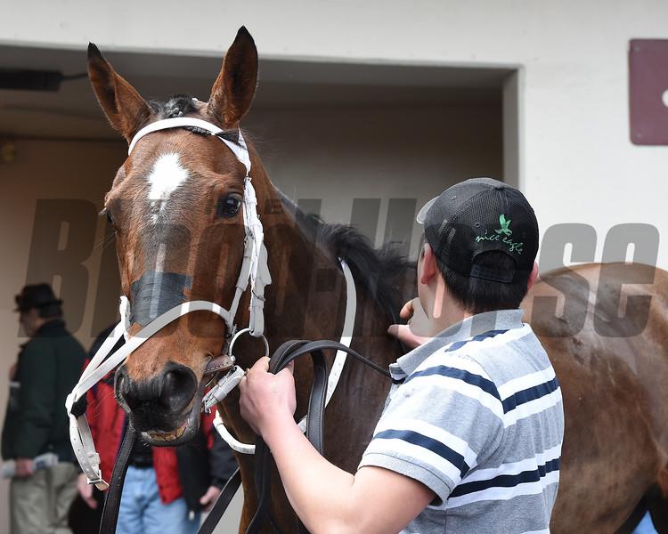 Before You Know It wins the 2015 Karakorum Elektra Stakes.<br /> Coglianese Photos