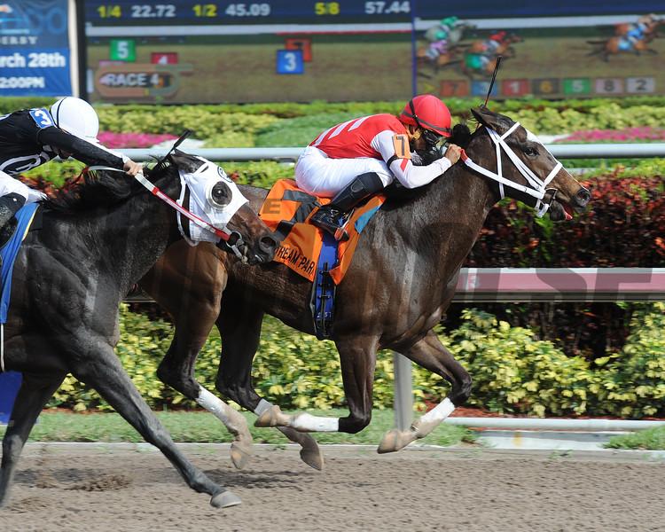 Ekati's Phaeton wins the 2015 Old Hat Stakes at Gulfstream Park.<br /> Coglianese Photos/Leslie Martin