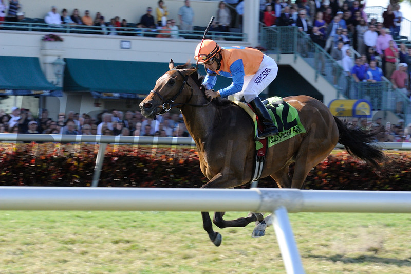 Jewel of a Cat wins the 2015 Ladies Turf Sprint Stakes.<br /> Coglianese Photos/Kenny Martin