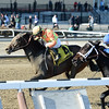 America wins the 2015 Affectionately Stakes at Aqueduct.<br /> Coglianese Photos
