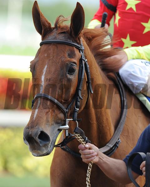 Parranda wins the 2015 Marshua's River Stakes at Gulfstream Park.<br /> Coglianese Photos/Lauren King
