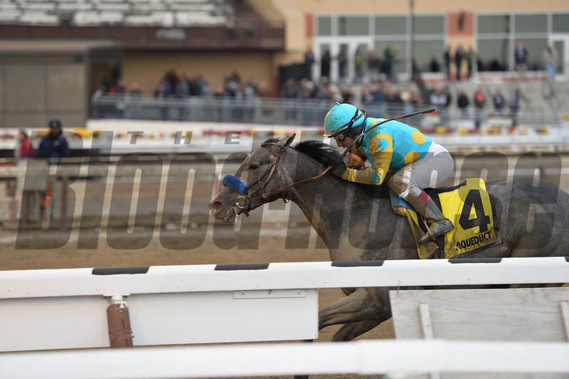 El Kabeir wins the 2015 Gotham Stakes at Aqueduct. <br /> Coglianese Photos/Joe Labozzetta